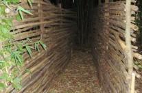 L'entrée du labyrinthe dans la bambouseraie